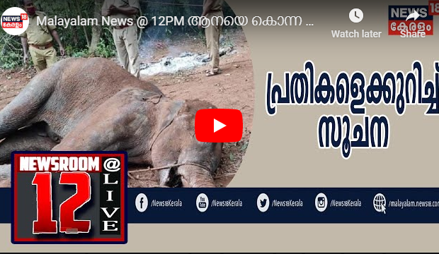 The painful death of a pregnant elephant in Kerala