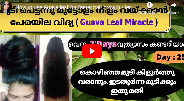 Faster Hair Growth Using Guava Leaves